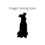 Petland Heath, OH Redbone Coonhound